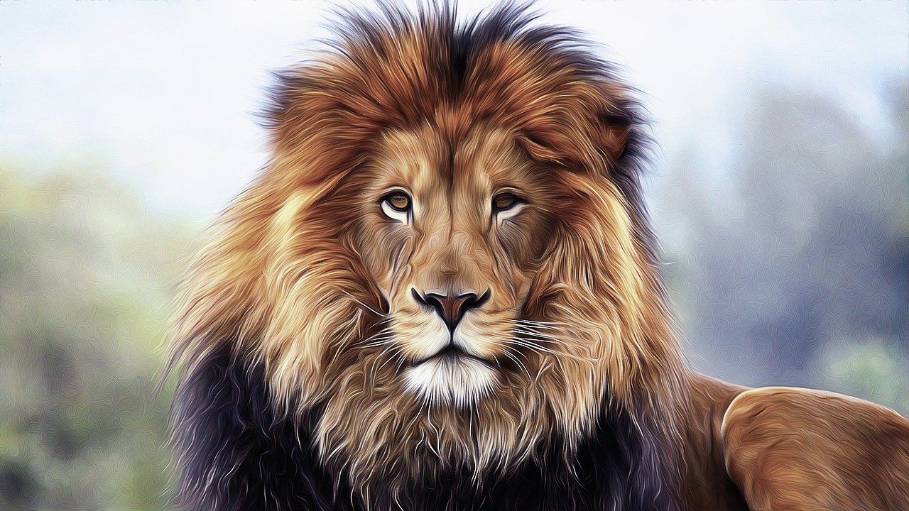 lion, king, animal